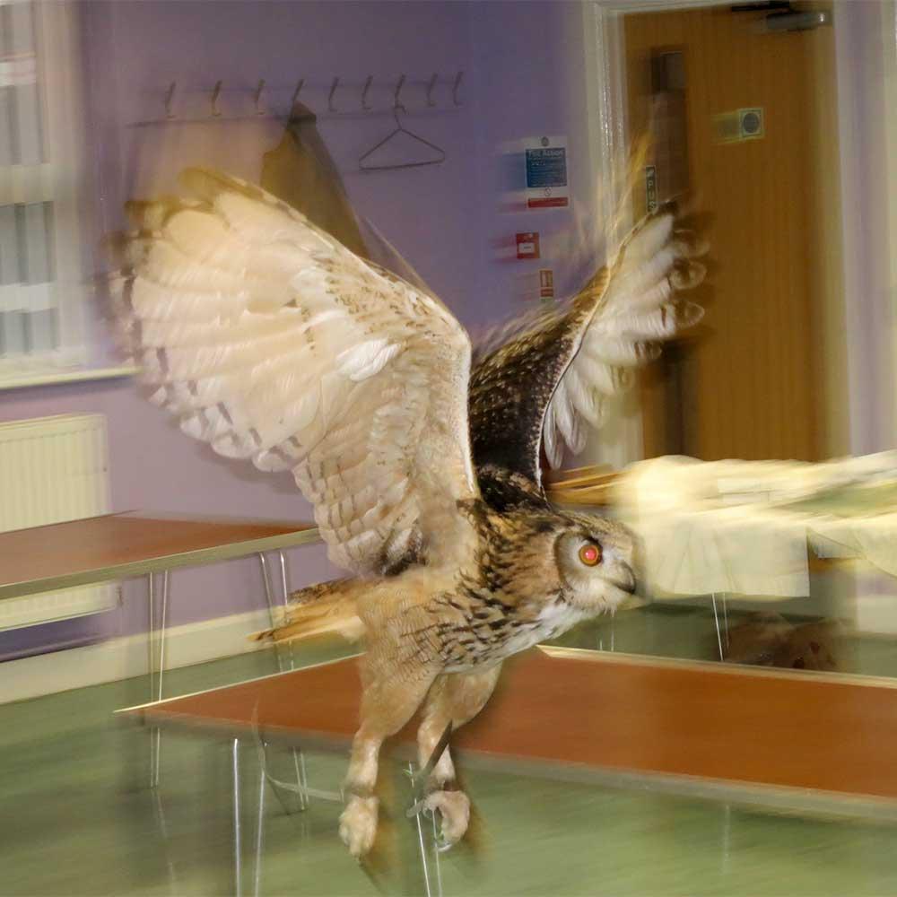 OWL-PHOTO-REF